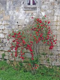 055-Chateau d'Ardennes Fléac sur Seugnes